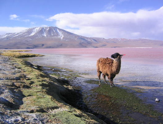 Top 5 Destinations To Visit In South America