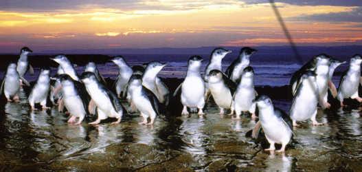 Philip Island in Melbourne