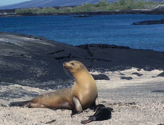 Hit the Galapagos Islands