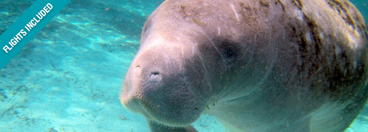Belize Manatee Conservation