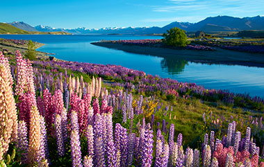 New Zealand Tours Destinations